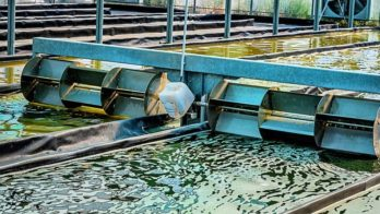 Les bassins de production