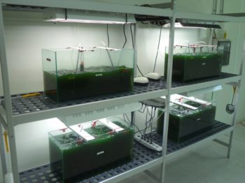Le laboratoire